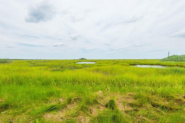 marshland in greenbackville va